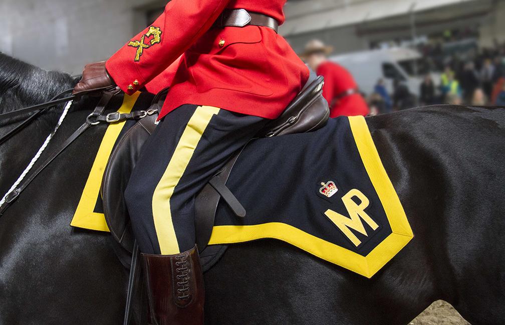 RCMP Horse, Ottawa