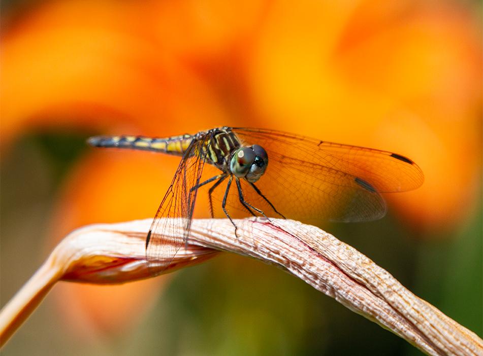 Dragon Fly, Ottawa, Ontario