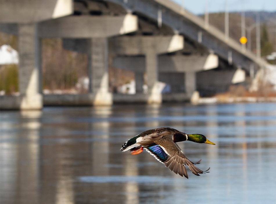 Flying Low, Hawkesbury, Ontario