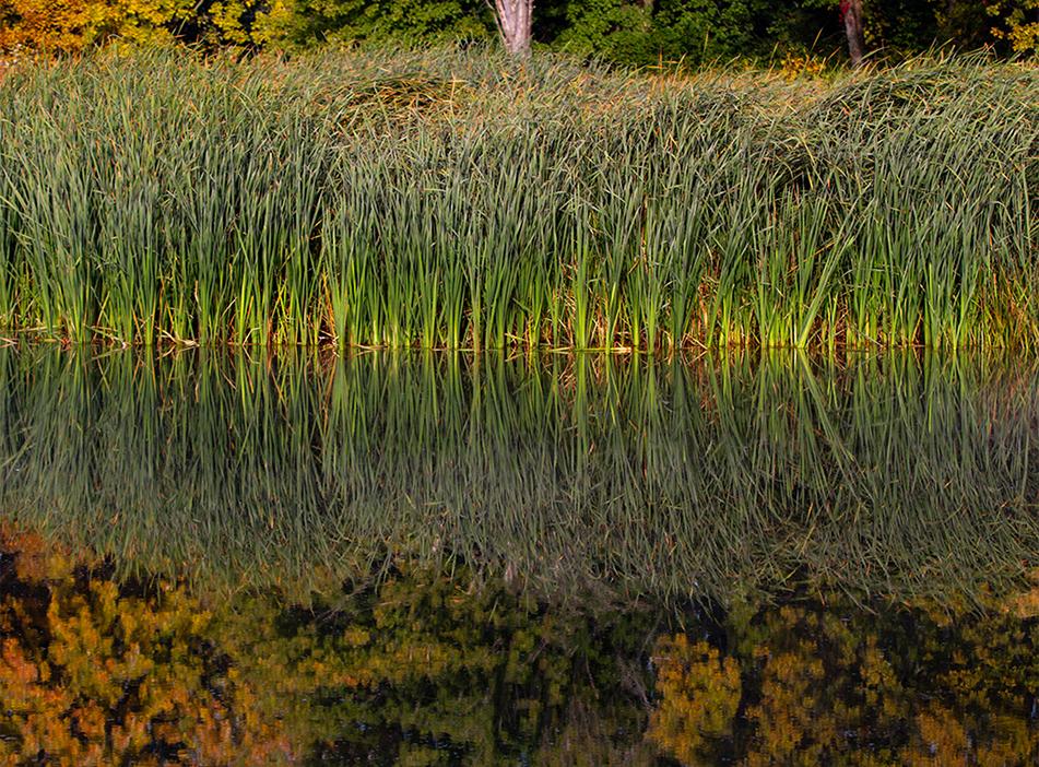 Petrie Island Reflection, Petrie Island, Ontario