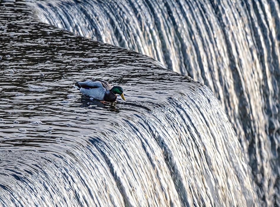 Life on the Edge, Rideau Falls, Ottawa, Ontario