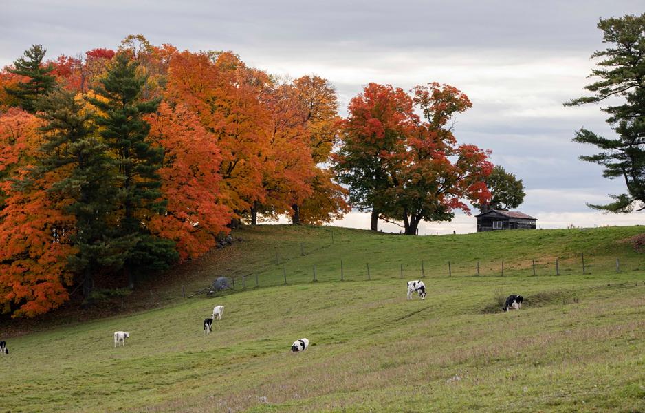 Cumberland Farm, Ontario